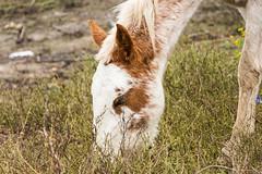 Island horse (Jorge Toselli) Tags: horse argentina nikon victoria rosario tamron entrerios