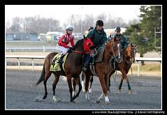 IMG_9593 (femalejockeys) Tags: femalejockeys turfway park female athletes horse racing horses thoroughbred kentucky derby