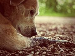 2016-07-24_16-36-18 (torstenbehrens) Tags: hund moorbad olympus ep5 sigma 60mm f28 dn digital camera