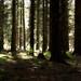 Waldboden - Licht und Schatten