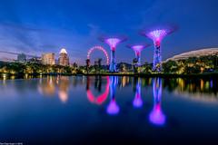 Blue Hour @ GBTB (Chye Guan, Tan) Tags: touristattraction bluehour landscape cityscape urbanscape singapore singaporescape gardenbythebay gbtb dragonflylake singaporeflyer flyer supertree lake lighting fujifilm