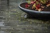 Bird (Michel van Kooten) Tags: bird birds vogel vogels duif duiven pigeon pigeons dove doves