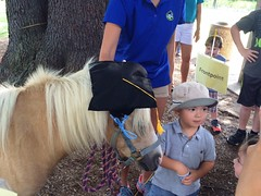Teddy the Therapy Horse (fairfaxcounty) Tags: fairfax fairfaxcounty government virginia development disabilities itc infant toddler csb communityservicesboard graduation therapy success education children youth