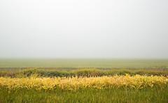 lost at sea (eDDie_TK) Tags: colorado co weldcountyco weldcounty weld rural rurallife ruralliving farming farms fog weather