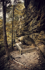 Forgotten (Anthonypresley1) Tags: chicago anthony anthonypresley illinois nature landscape stairs steps tree trees canyon dirt explore antique old retro autumn season seasons vintage
