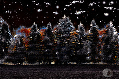 Cosmic night (explored) (firstlookimages.ca) Tags: surreal landscape trees cosmic art artistic artisticmanipulation abstractnature abstract digitalmanipulation digitalart detail digitalphotography colorful fiction dreamscape hss
