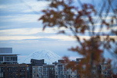 Meeting of Autumn and Winter (McKenna Princing) Tags: mtrainier mountain snow winter autumn fall leaves dof seasons seattle city skyline juxtaposition dusk evening volcano