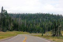 Vast Forest (Paige_Terhune) Tags: like comment follow nature landscape road pine trees tree forest brianhead utah it
