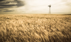 Wheat field (3dRabbit) Tags: wa wheat field windmill wind windy food usa nature natural longexposure canon wide sungjinahn