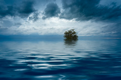 After The Flood (shutterclick3x) Tags: tree countryside clouds waterscape blue hour frankloose