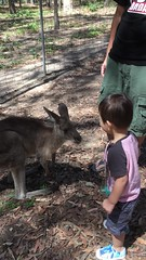 2016.10.10 -4 (amydon531) Tags:   gold coast australia trip travel vacation baby boys kids brothers justin jarvis family toddler cute paradise country kangaroos