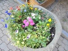 004 (en-ri) Tags: fiorellini flowers sony sonysti vaso