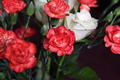 DSC_3214 (PeaTJay) Tags: nikond750 reading lowerearley berkshire macro micro closeups gardens indoors nature flora fauna plants flowers rose roses rosebuds carnations