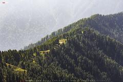 NathiaGali Track to MiranJani (AQAS.Clicks) Tags: landscape pakistan nature tracking nathiagali murree miranjani mushkpuri forest