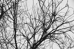 ... (***toile filante***) Tags: branches ste structure struktur bw sw schwarzweiss blackandwhite monochrome tree baum