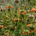 Florzinhas da Mizinha