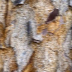 Bark : An Impression (Ramesh Adkoli) Tags: abstract closeup bengaluru capturenx d800e