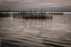 ALBUFERA_SUNSET-26 (PHOTOSORIANO) Tags: sunset people water valencia birds landscape spain nikon albufera d90