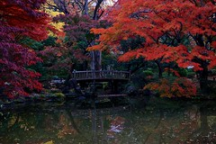 park bridge autumn red water japan reflections lumix... (Photo: somazeon on Flickr)