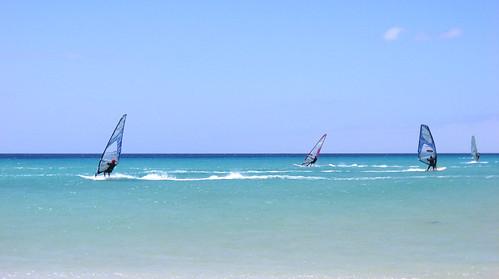 ocean sea sport wind fuerteventura atlanticocean windsurfer windsurf watersport