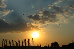 sol (betho itinerante) Tags: sol atardecer arboles aves parvada nube horizonte