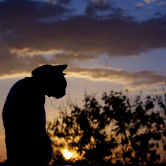 Sunset (EXPLORED) (The secret life of Mister Blur) Tags: sunset cat nikon bokeh dusk rex chillout thecat forlife d7100 thexx bokehism