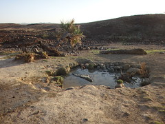Kenia. Loyangalani. Pequeño oasis (escandio) Tags: kenia 2014 loyangalani viajealturkana