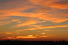 Abendhimmel ber der Sorge-Niederung; Bergenhusen, Stapelholm (73) (Chironius) Tags: sunset sky germany atardecer deutschland evening abend zonsondergang tramonto sonnenuntergang dusk himmel ciel cielo alemania dmmerung crpuscule allemagne hemel germania schleswigholstein schemering crepuscolo gkyz  ogie abends pomie  niemcy bergenhusen   stapelholm pomienie szlezwigholsztyn