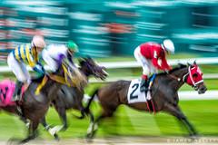 Pan Fun (James Neeley) Tags: sports action horseracing tampabaydowns jamesneeley sportsphotographyworkshop