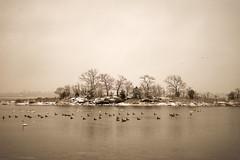 (JimmyJGreen) Tags: ocean morning sea sky white snow storm birds sunrise bay harbor bright cloudy gray flight ducks overcast dreary providence rhodeisland maritime warwick cranston