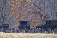Shelter From the Rain (glenda.suebee) Tags: ohio rain march amish farms buggy 2015 glendaborchelt