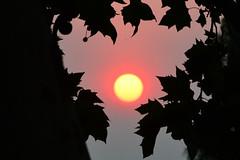Fiery Sunrise (RobW_) Tags: africa sunrise wednesday march estate wine south jordan western cape suite luxury stellenbosch fiery kloof 2015 mar2015 11mar2015