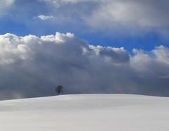 Winter landscape with clouds (Tobi_2008) Tags: schnee winter sky snow tree clouds germany landscape deutschland saxony himmel wolken ciel sachsen landschaft allemagne baum germania diamondclassphotographer flickrdiamond