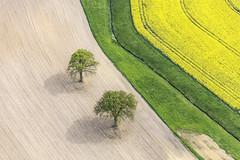 FlickrjobEXPO Two oak trees (Aerial Photography) Tags: trees tree field by landscape la oak landwirtschaft feld aerial rape agriculture blte landschaft bume raps baum deu klaus zwei luftbild leaftree eiche luftaufnahme colza bayernbavaria deutschlandgermany ndb laubbaum deciduoustree ackerbau vilsheim foliagetree fotoklausleidorfwwwleidorfde leidorf unterfroschham vilsheimlkrlandshut 05052014 flickerjobexpoklausleidorf flickrjobexpo 5d374957