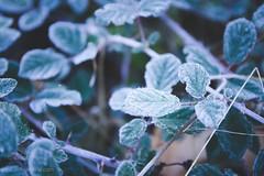 (Beatriz Prez Moya) Tags: winter naturaleza cold nature nikon otoo invierno frio beatriz diciembre 2013 nikond7000 beatrizperez matabegid