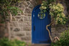 The Blue Door #4 (tiltshift) (Iaian7) Tags: door flowers summer june stone wall garden vines rocks panasonic cranbrook bluedoor tiltshift gh4 cranbrookhouseandgardens panasonicgh4