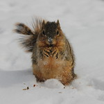 Squirrels on a Very Cold Winter's Day at the University of Michigan (February 18, 2015) thumbnail