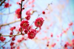 IMG_1172 () Tags: japan kyoto    osaka