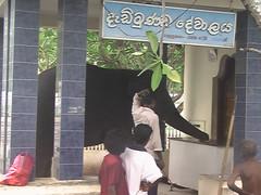 Sacred elephant in the Ruhunu Maha Kataragama Devalaya