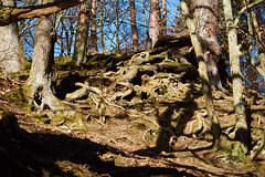 Hexenteich (Sylsine) Tags: bäume wurzeln menden sauerland