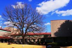 (setagayatoieba) Tags: winter sky japan museum tokyo      setagaya     setagayatoieba