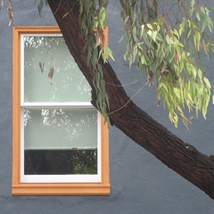 """trees outstrip most people in the extent and depth of their work for the public good."" ~ sara ebenreck (msdonnalee) Tags: tree window leaves arbol ventana leaf fenster janela rvore fentre baum treelimb"