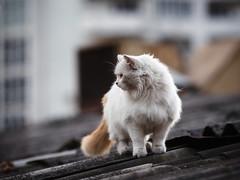 Street cat 154 (Yalitas) Tags: pet cats cat canon kat feline chat kitty gato felino katze katzen kot kedi kass gatta streetcat kotka  kocka  katte  katzchen kottur