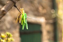 Les pinces à linge (Nathalie Le Bris) Tags: verde vert green bokeh pinzas pinces evol door puerta porte