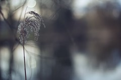 Shadows and lines (sonia.sanre) Tags: feelings canon noche night flowers sombras shadows lines bokeh