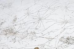 - (_barb_) Tags: australia scratches surface cracks sorrento