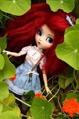 Crocus (Blublue) Tags: blublue pullip doll jun planning groove ludmila crocus red mohair natrume wine wig dark stars aila capucine flower fleur rouge bleu blue