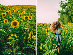 IMG_1110_2 (DavydchukNikolay) Tags:       kids kidsphoto kidsphotography happy happymoments flower summer photowithkids sunflower