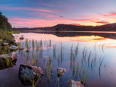 Loch na Ba Ruaidhe at Sunset - Again! (Highlandscape) Tags: em5 landscape sunset culnakirk sundown outdoor rural rocks httphighlandscapezenfoliocom reeds cloud twilight places grass olympus natural lighting drumnadrochit serene water beauty colour loch trees summer scotland still dusk calm reflection sky features ecosse countryside ba ruaidhe highland red cattle