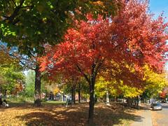 Dundonald Park, Ottawa's downtown (lezumbalaberenjena) Tags: dundonald park church iglesia saint st elijah elias